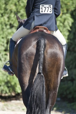 Tips for dealing with horse show jitters