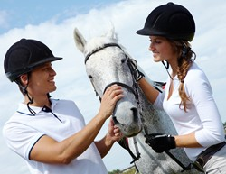 Equine Studies best degrees to get