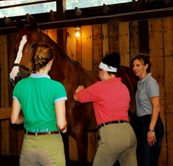 Students preparing for an equestrian career as an equine massage therapist.