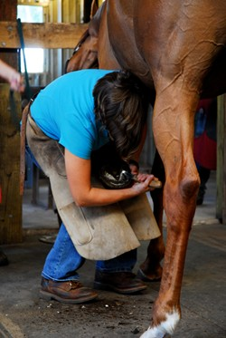 a farrier student trims a hoof