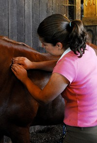 A student gives a horse massage in her Equine Massage Therapy class at Meredith Manor.
