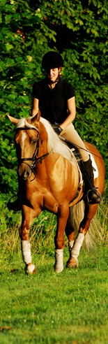 Students that major in Dressage at Meredith Manor have 8 one hour dressage lessons per week.