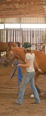 Students work on training horses in their Training I class at Meredith Manor, a horse training school.