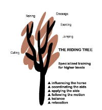 The Riding Tree
